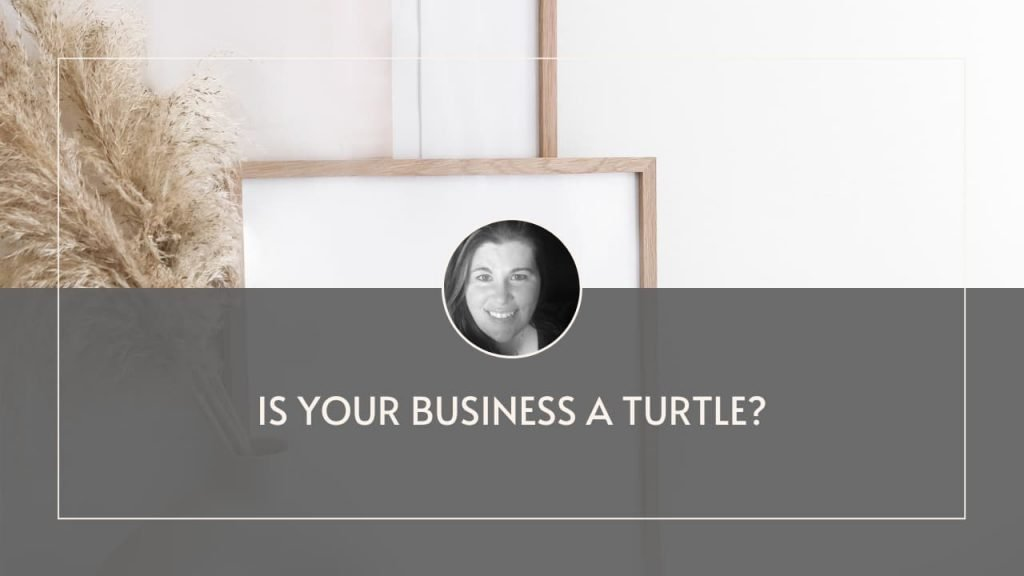 Is your business a turtle?